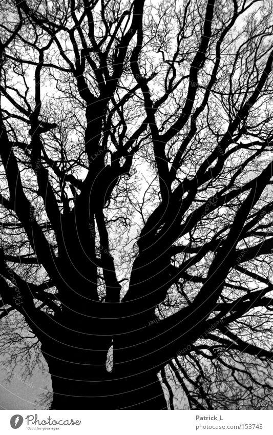 Netzwerk Baum Wald beeindruckend dunkel schwarz Dämmerung Kontrast verzweigt ruhig Trauer Vergänglichkeit Neugier Landschaft Schwarzweißfoto Vertrauen Winter