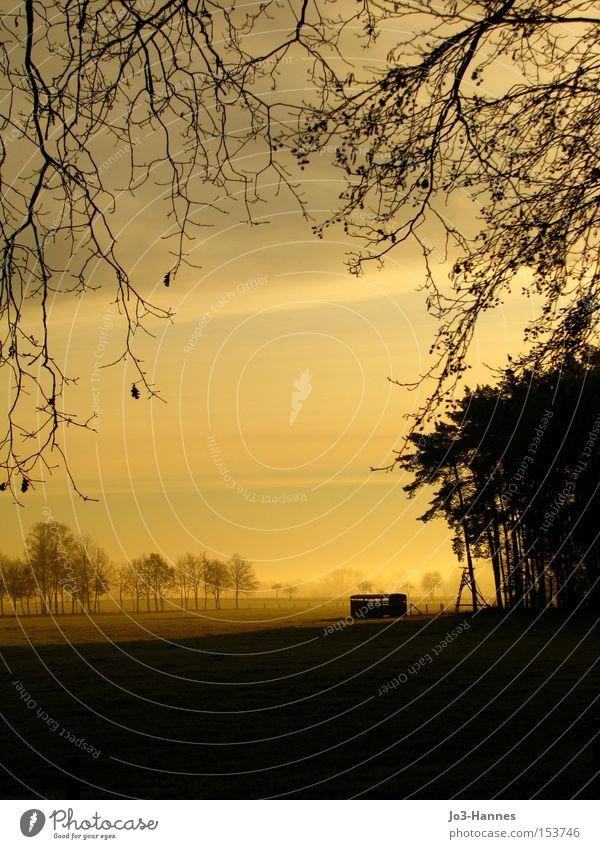 Gold im Mund Winter Ferne träumen Nebel Beginn Romantik Sehnsucht Waldrand