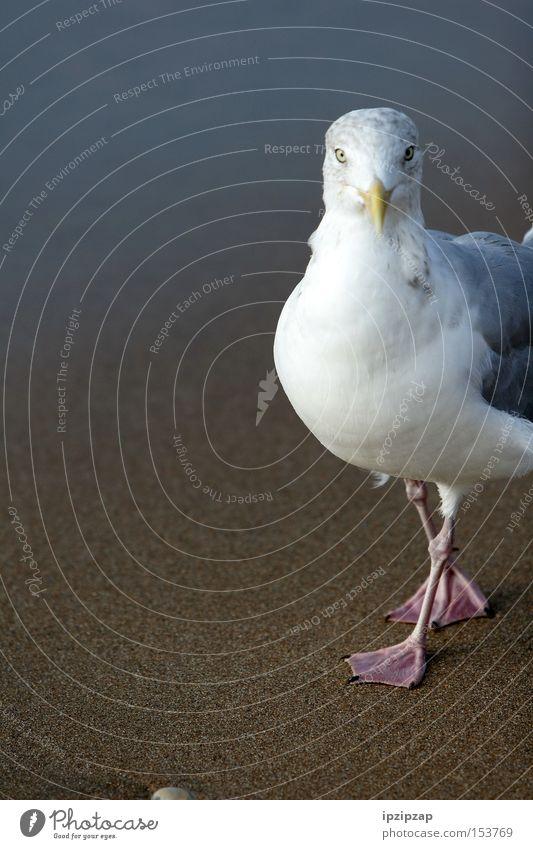 Was guckst Du? weiß Strand Ferien & Urlaub & Reisen Tier Sand Vogel Küste
