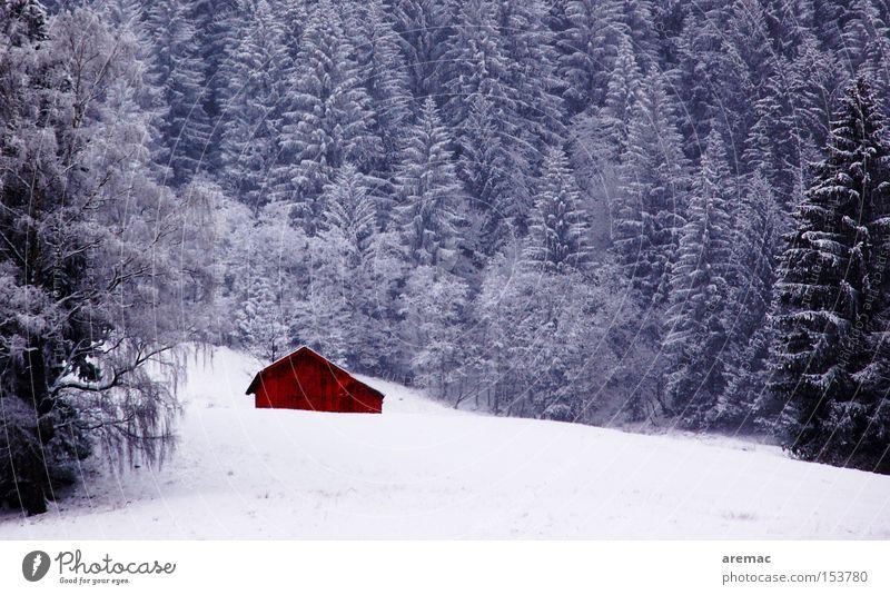 Höhenlage Wald Winter Baum Schnee Eis kalt Alpen Landschaft Natur verfallen