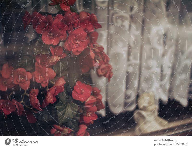 Plastikfensterblumen alt Pflanze schön weiß Blume rot ruhig schwarz Gefühle Tod Kunst authentisch ästhetisch Fröhlichkeit kaputt Freundlichkeit