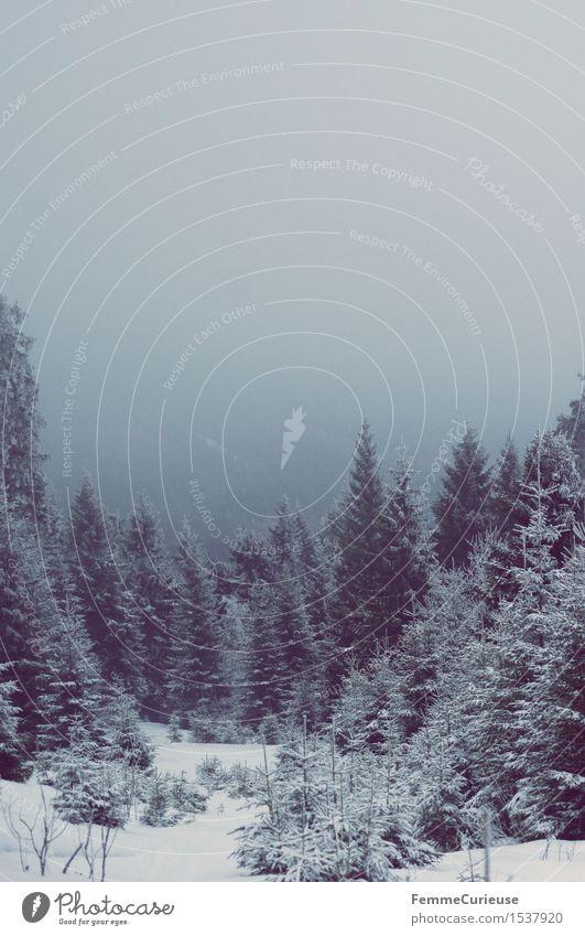 SnowDays_02 Natur Landschaft Zufriedenheit Luft Sauerstoff Fichtelberg Berge u. Gebirge Nadelwald Tanne Schnee Winter fantastisch Klarer Himmel idyllisch