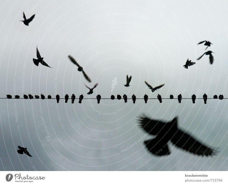 Wie ein Vogel auf dem Draht Himmel Linie fliegen sitzen Luftverkehr Pause Kabel Flügel Reihe Taube Leitung Sitzreihe Installationen flattern