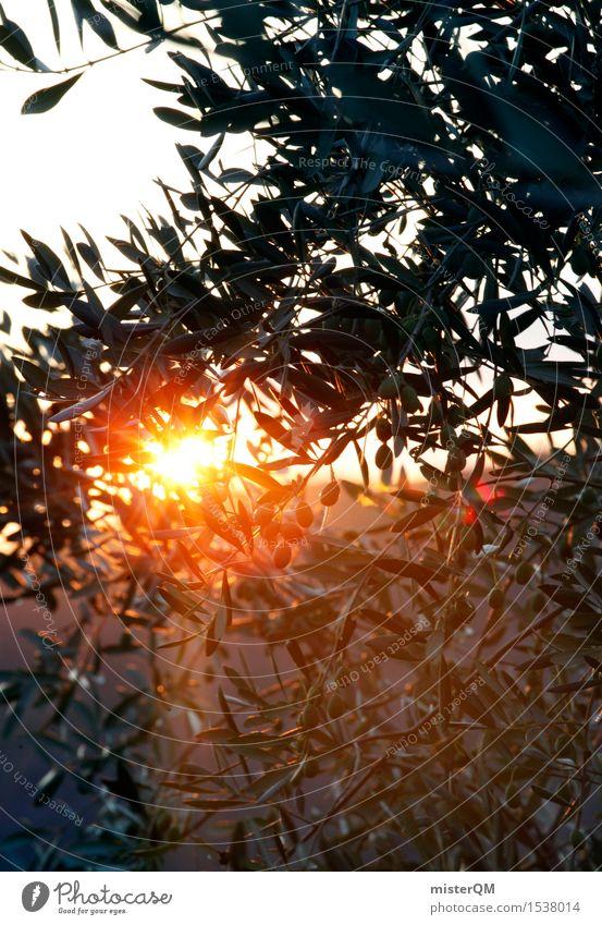Olivengold Natur Ferien & Urlaub & Reisen Pflanze Sonne Landschaft Umwelt Beleuchtung ästhetisch Italien Ernte mediterran Meditation Toskana Olivenbaum