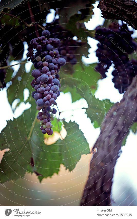 Wein am Stiel. Kunst Kunstwerk ästhetisch Weinberg Weinbau Weintrauben Weinlese Weingut reif lecker Bioprodukte Toskana Italien Farbfoto mehrfarbig