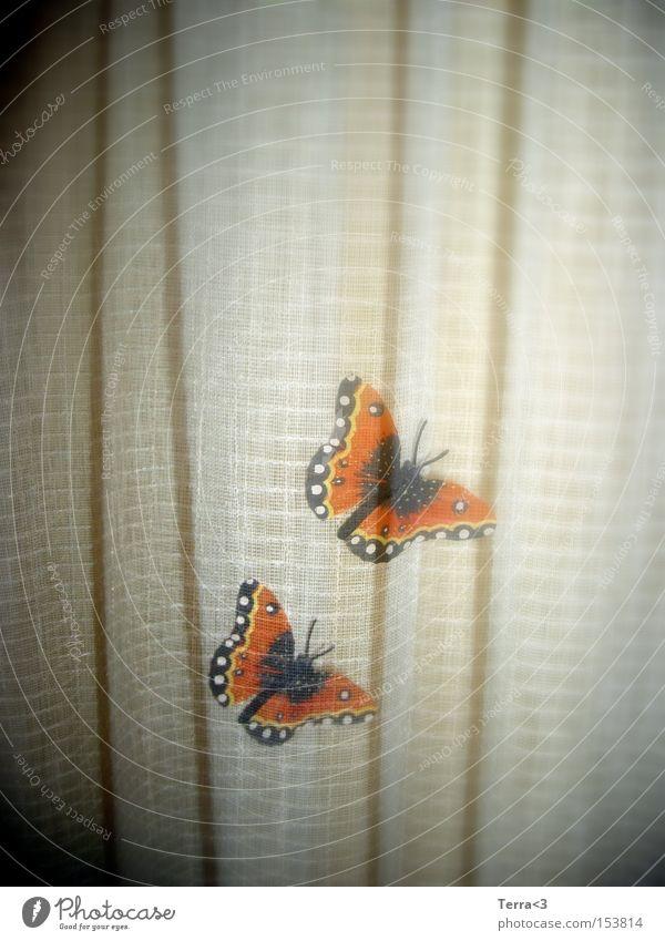 Butterfliege schön Sommer Freude Liebe Tier Frühling orange fliegen paarweise Kitsch Insekt Schmetterling Vorhang Doppelbelichtung Flugtier Admiral