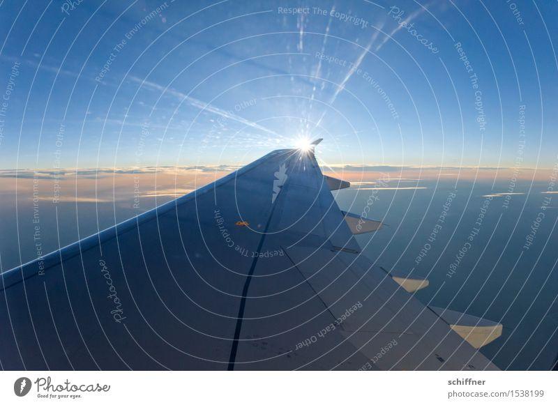 Sonnenflügel Himmel nur Himmel Wolkenloser Himmel Sonnenaufgang Sonnenuntergang Sonnenlicht Schönes Wetter Luftverkehr Flugzeug Passagierflugzeug