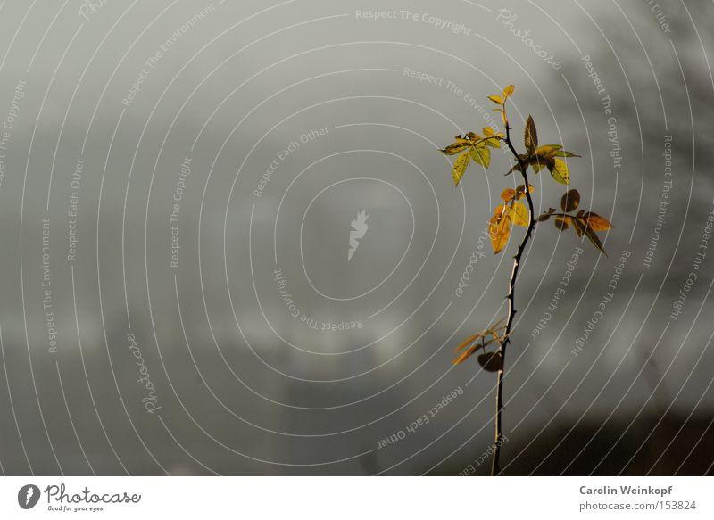 Lichtblick. Natur grün schön Pflanze Blatt Winter Ferne Landschaft gelb kalt Herbst Freiheit grau Feld gold Ausflug