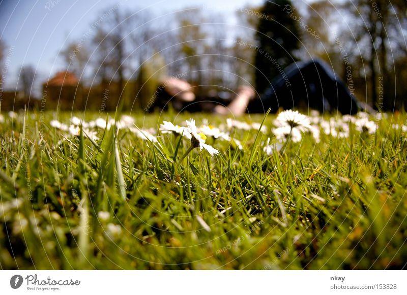 in the meadow Wiese Gras Natur liegen Blume Sommer Erholung Unschärfe flowers