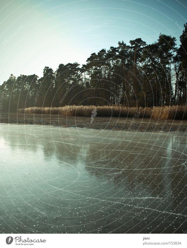 Spiegelwald Baum ruhig Winter Wald kalt See Eis frei Frost Schilfrohr Symmetrie Schlittschuhlaufen