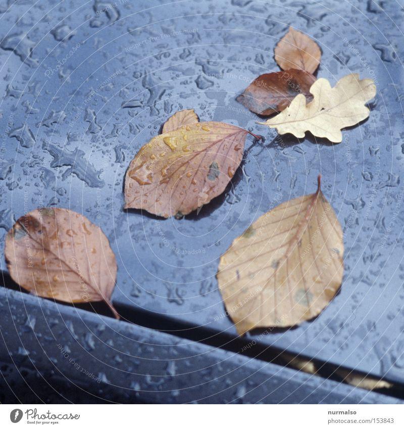Herbstreste Blatt schwarz Farbe grau Regen Wassertropfen Filmmaterial Tropfen Am Rand Spalte Lack unheimlich Dia Wagen Oktober