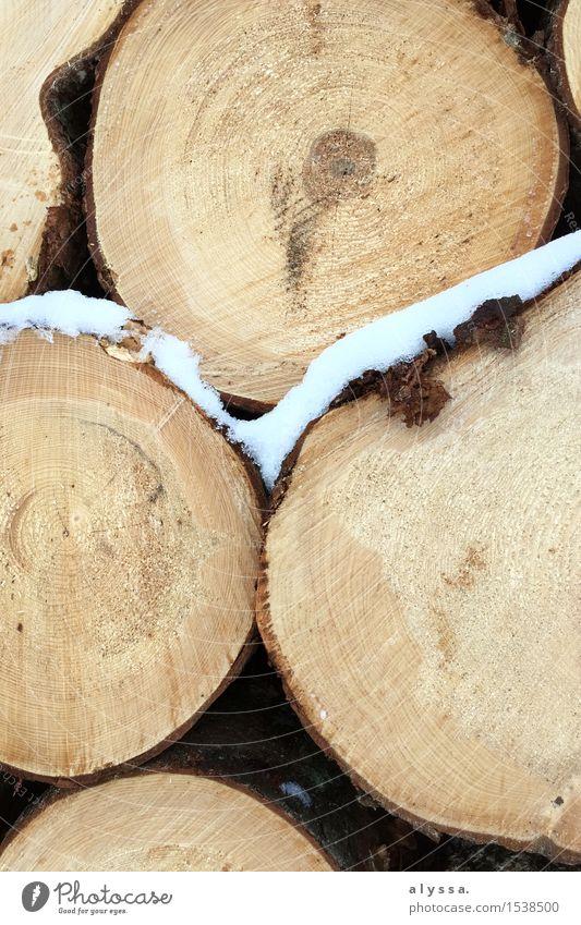 Frostiges Holz Umwelt Natur Winter Eis Schnee Baum Wald kalt natürlich braun weiß Querschnitt Baumrinde Farbfoto Gedeckte Farben Außenaufnahme Menschenleer