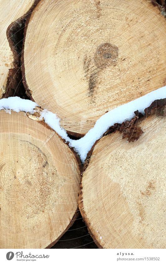 Frostiges Holz 3 Umwelt Natur Pflanze Tier Winter Eis Schnee Baum Ewigkeit Leben Baumrinde Baumstamm Querschnitt Farbfoto Gedeckte Farben Außenaufnahme Muster