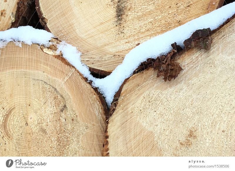 Frostiges Holz 2 Umwelt Natur Pflanze Tier Erde Winter Schnee Baum Feld Wald rund braun weiß Senior Leben Baumrinde Lebewesen Querschnitt Farbfoto