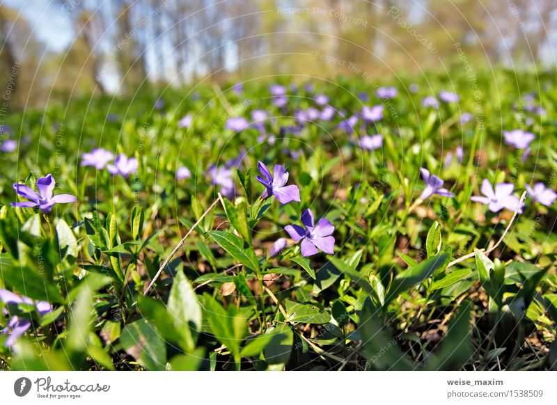 Frühlingsblumen. Junge grüne Blätter und Blumen. schön Leben Sommer Sonne Umwelt Natur Pflanze Himmel Baum Blatt Blüte Grünpflanze Park Wald Wachstum hell neu