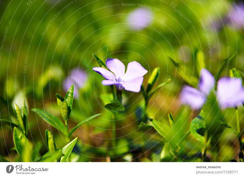 Frühlingsblumen. Junge grüne Blätter und Blumen. schön Leben Sommer Sonne Umwelt Natur Pflanze Baum Blatt Blüte Grünpflanze Garten Park Wald Wachstum hell neu