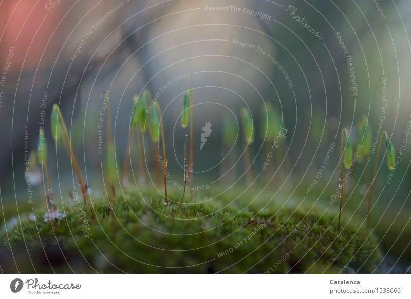 Moosfruchtkörper elegant Natur Pflanze Wasser Herbst Winter Eis Frost Garten alt atmen Blühend frieren verblüht Wachstum ästhetisch außergewöhnlich frisch nass