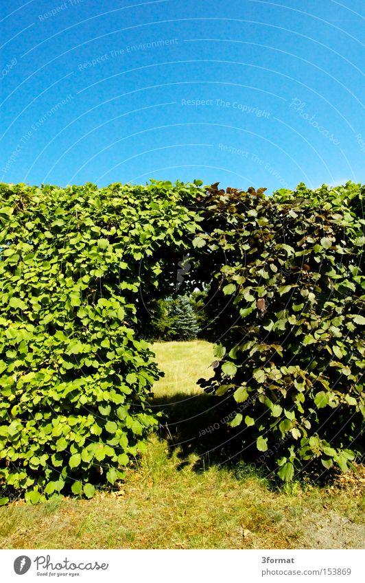 durchgang Hecke Grenze Garten Blatt Tür Durchgang Portal Erfolg Übergang Mauer Wärme Durchbruch Sommer Park Kommunizieren Kleingartenanlage Traurigkeit