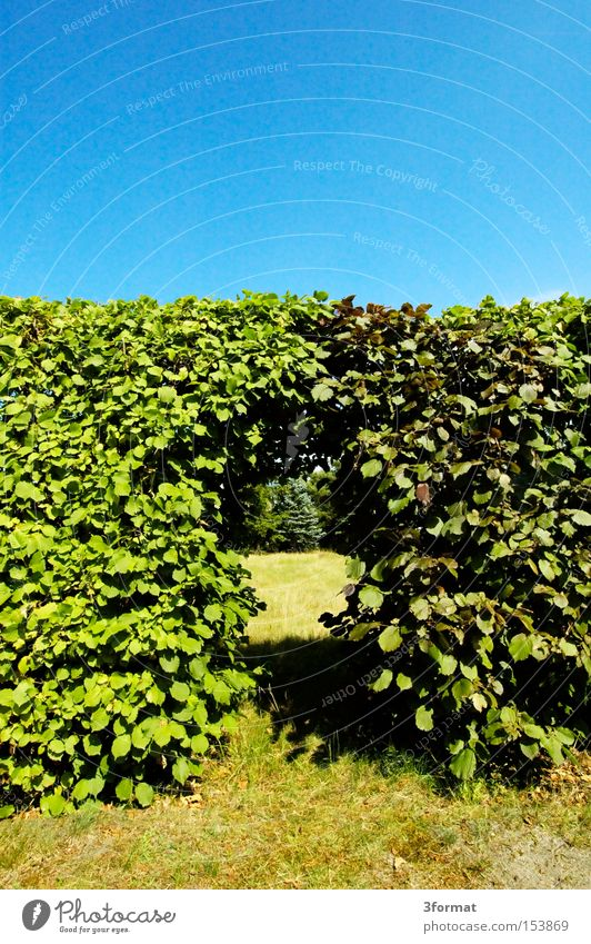 durchgang Sommer Blatt Wärme Garten Mauer Traurigkeit Park Tür Erfolg Kommunizieren Grenze Eingang Hecke Durchgang Übergang Portal