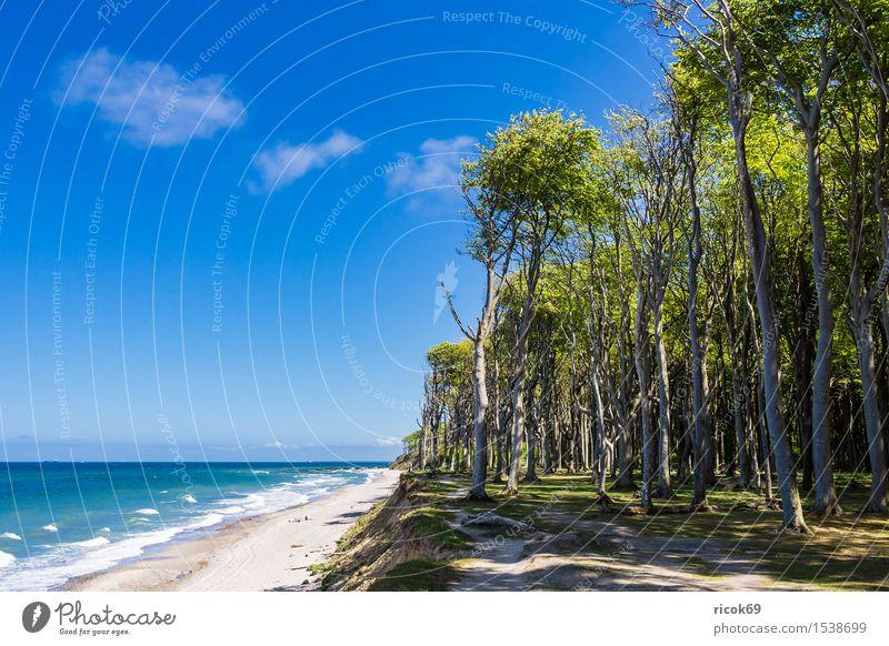 Küstenwald an der Ostseeküste Ferien & Urlaub & Reisen Tourismus Strand Meer Wellen Natur Landschaft Wolken Baum Wald Wege & Pfade blau Romantik Idylle Umwelt
