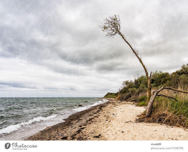An der Küste der Ostsee Erholung Ferien & Urlaub & Reisen Strand Meer Wellen Natur Landschaft Wasser Wolken Baum Idylle Tourismus Umwelt Ostseeküste Himmel
