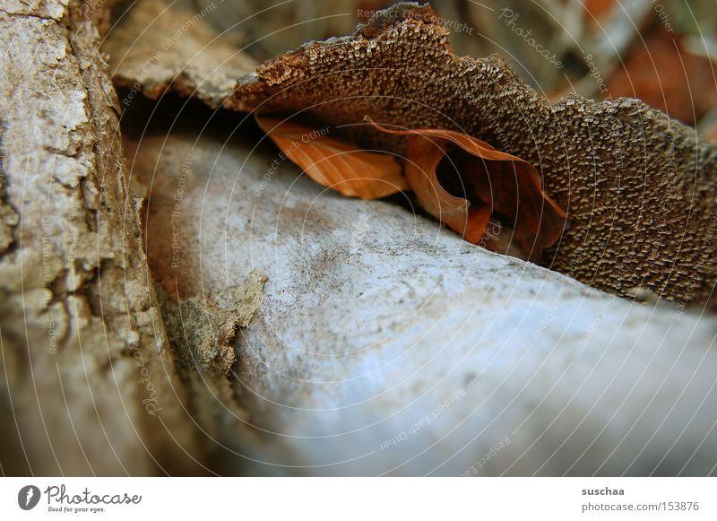 unterschlupf Natur Blatt Umwelt Holz Baumstamm Schalen & Schüsseln Baumrinde Oberfläche Kruste porös
