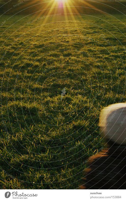 draussen mit e.... Sonne grün Wiese Herbst Gras Rasen Mütze Weide Lichteinfall Kopfbedeckung Grünfläche