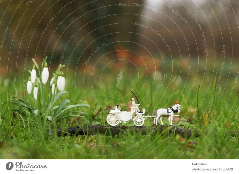 Für immer? Umwelt Natur Pflanze Frühling Blume Blüte Garten Park Wiese klein natürlich Frühblüher Schneeglöckchen Hochzeit Hochzeitstag (Jahrestag)