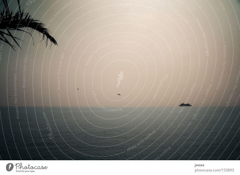 Ein Schiff wird kommen … Ferien & Urlaub & Reisen Fernweh Heimweh Himmel Horizont Meer Möwe heimwärts Palme Wasserfahrzeug Sehnsucht Schifffahrt Strand Küste