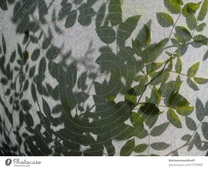 Waldsterben Natur grün Pflanze grau Sträucher Stoff