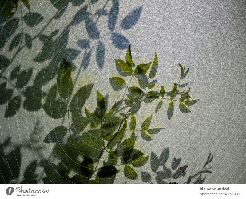 Hinter der Schattenwand Natur grün Pflanze grau Sträucher Stoff