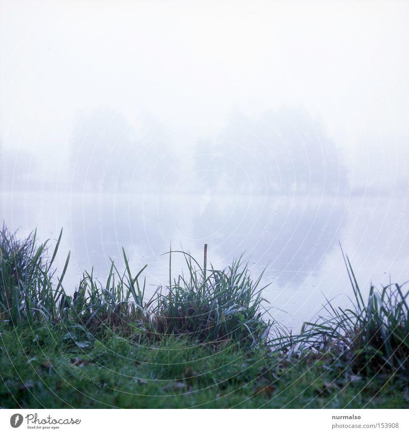 Mystic Morning grün Herbst Gefühle grau See Nebel Rasen Burg oder Schloss Schilfrohr Seeufer mystisch Heimat Kriminalroman Krimi Mecklenburg-Vorpommern Verhext