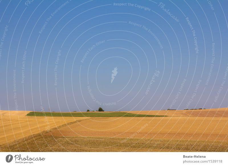 Good Day Sunshine Umwelt Natur Landschaft Erde Himmel Wolkenloser Himmel Sonne Sommer Schönes Wetter Pflanze Nutzpflanze Getreide Feld Frankreich beobachten
