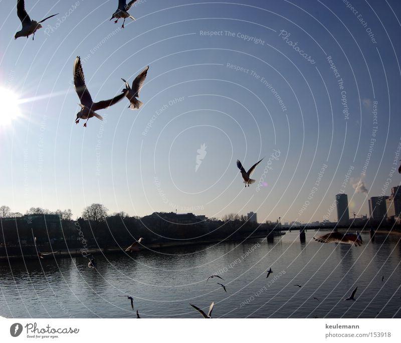 Mövinator Wasser Himmel Sonne Bewegung Landschaft Hochhaus Verkehr Möwe
