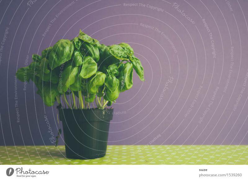 Grünzeug Pflanze grün Gesunde Ernährung Blatt Foodfotografie natürlich Lebensmittel frisch retro Kräuter & Gewürze violett lecker Bioprodukte Duft