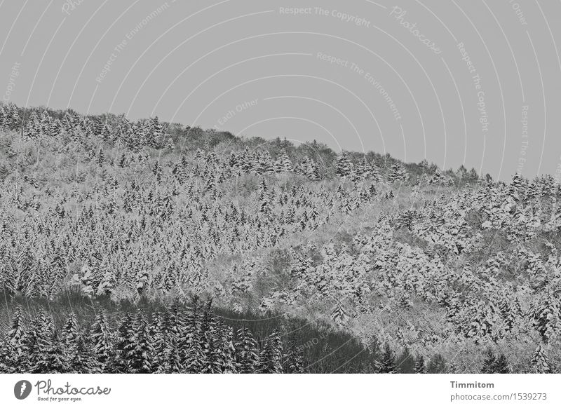 Unterkühlte Versammlung. Natur Landschaft Pflanze Himmel Winter Schnee Wald Hügel ästhetisch kalt natürlich grau schwarz weiß Schwarzweißfoto Außenaufnahme