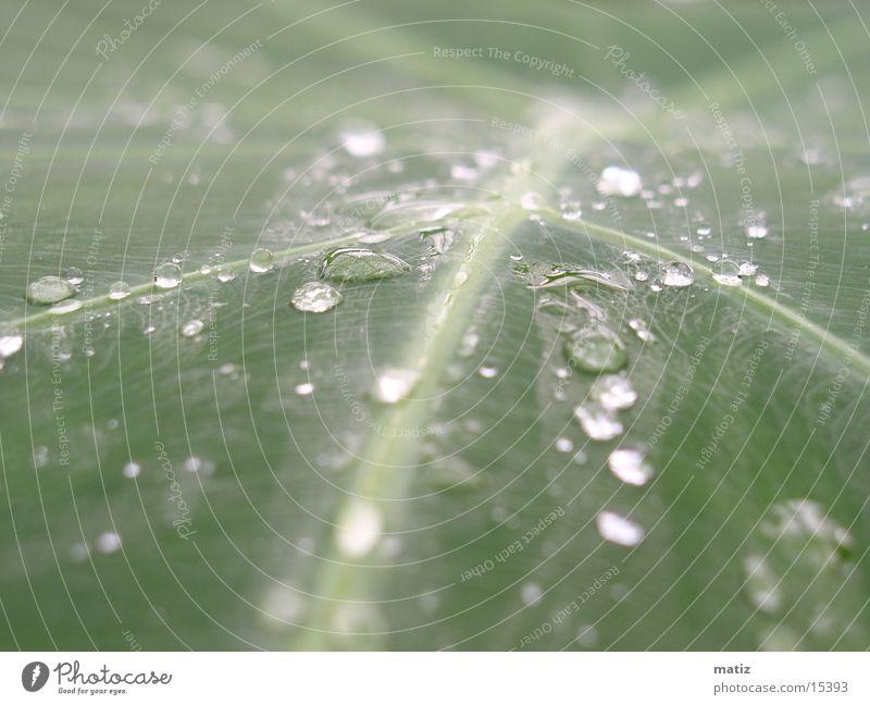 morgentau Blatt Palme Wassertropfen Urwald Makroaufnahme Seil