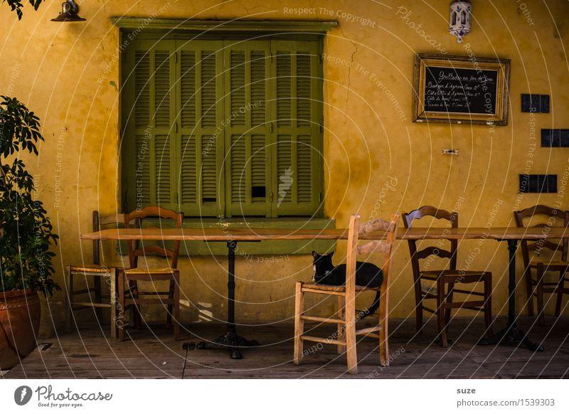 Frag doch die Katze Stuhl Tisch Restaurant Wärme Fenster Tier alt Gefühle Stimmung Zufriedenheit Gastfreundschaft Gelassenheit ruhig Pause Zeit Frankreich