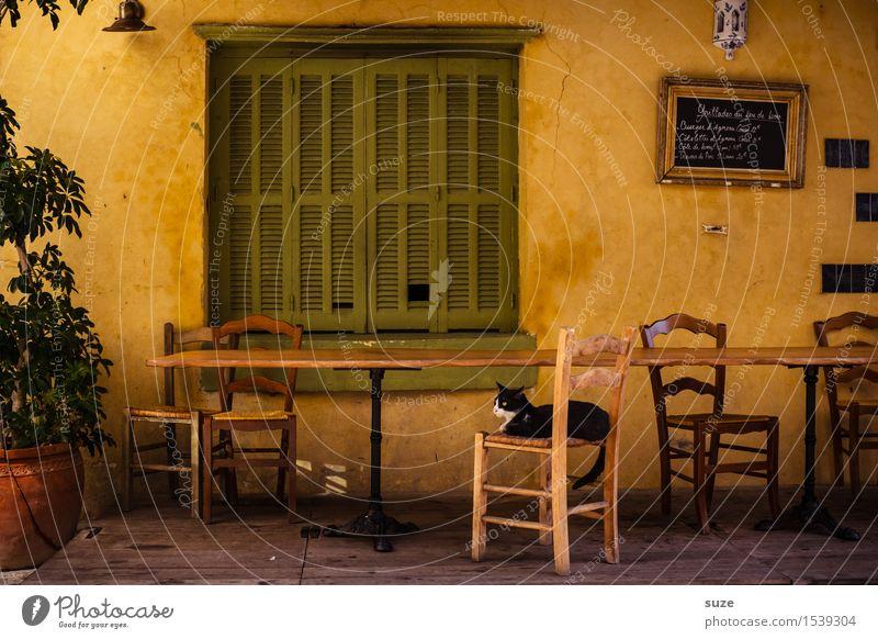 Kurz nach Mittag Stuhl Tisch Restaurant Wärme Fenster Tier Katze 1 alt Gefühle Stimmung Zufriedenheit Gastfreundschaft Gelassenheit ruhig Pause Zeit Frankreich