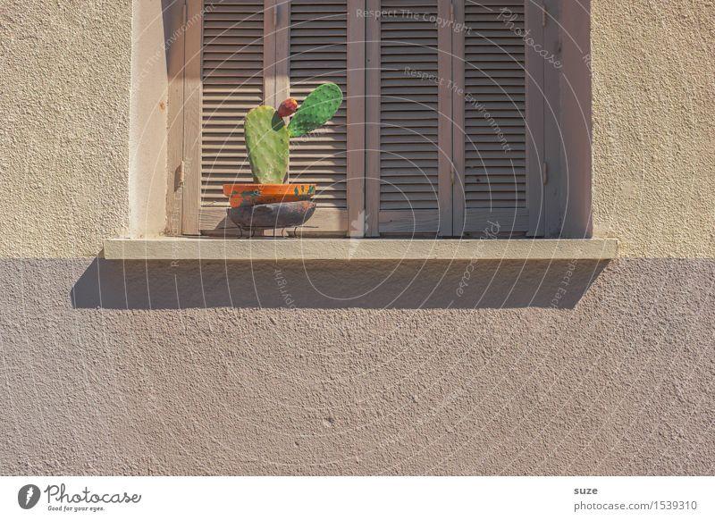 Die stille Treppe Pflanze grün Einsamkeit ruhig Fenster Wärme Wand Fassade trist geschlossen trocken Frankreich Stillleben Korsika Fensterladen Kaktus