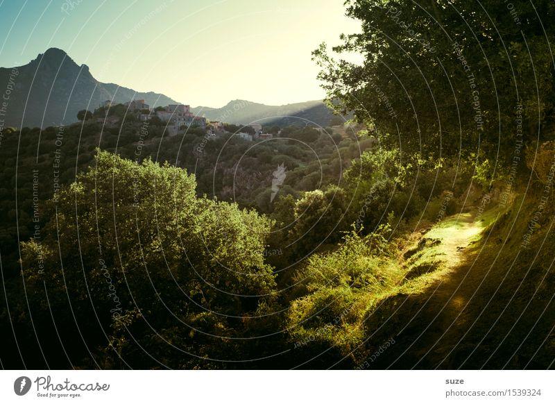 Der stille Pfad ruhig Ausflug Berge u. Gebirge wandern Natur Landschaft Pflanze Sommer Schönes Wetter Baum Sträucher Wald Wege & Pfade kalt grün Stimmung