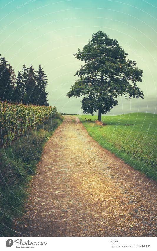 Was bisher geschah Himmel Natur grün Baum Landschaft Einsamkeit Wald Umwelt kalt Wege & Pfade Wiese Herbst Freizeit & Hobby Wetter Feld Erde