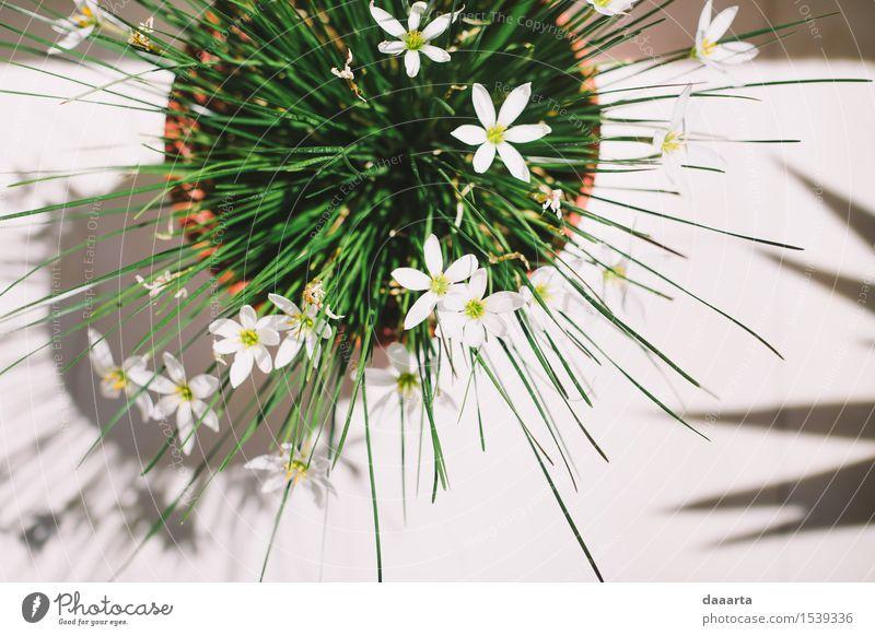 griechische Blumen Natur Pflanze grün schön Sommer Freude gelb Wärme Leben Innenarchitektur Gefühle Stil Spielen Lifestyle Freiheit