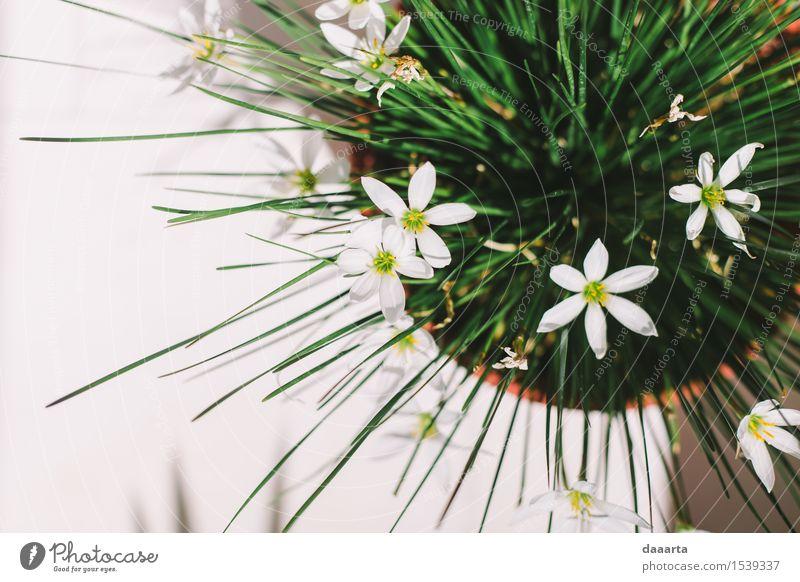 Natur Pflanze Sommer Sonne Blume Freude Umwelt Leben Gras Stil Garten Freiheit Stimmung Wohnung wild Häusliches Leben