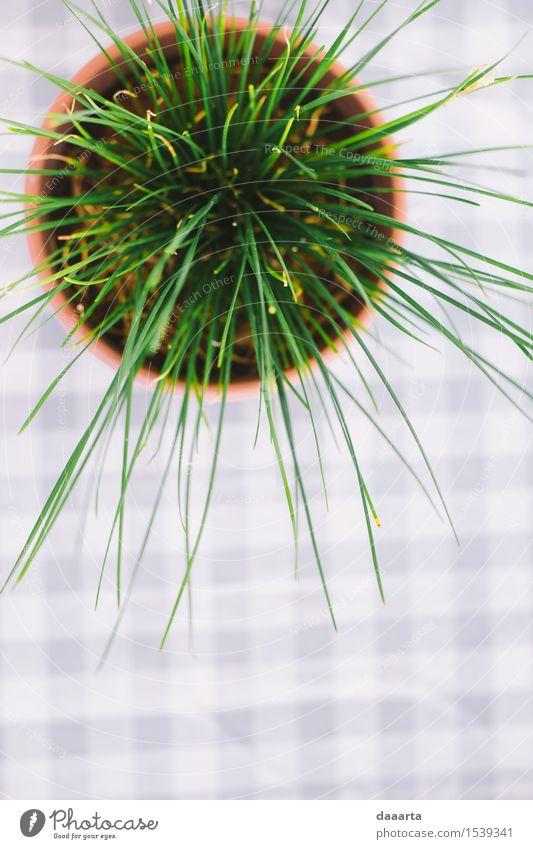 Grün Lifestyle elegant Stil Design Freude Leben harmonisch Freizeit & Hobby Abenteuer Freiheit Häusliches Leben Wohnung Innenarchitektur Tisch Natur Sommer