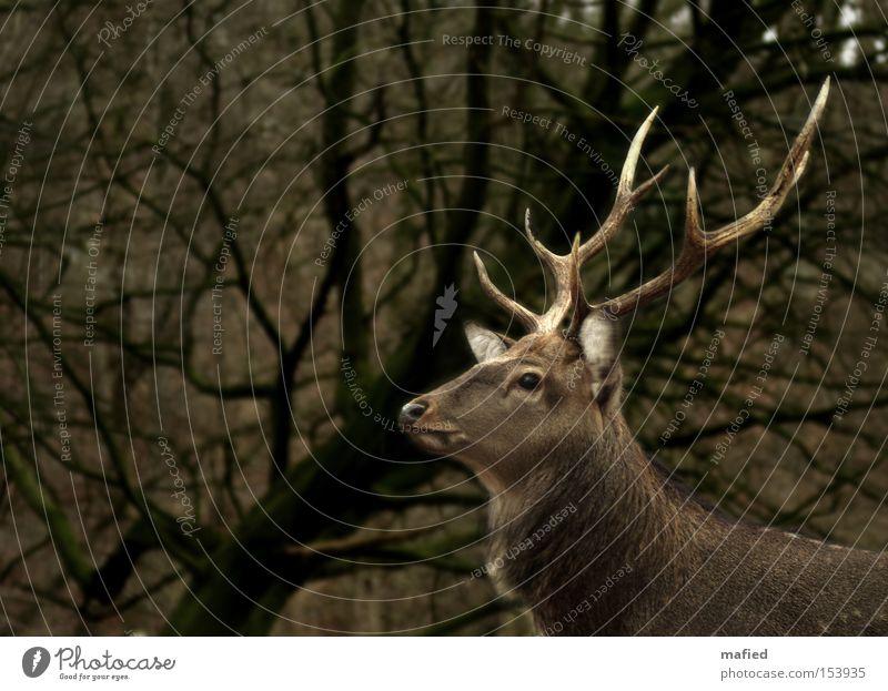 Sikahirsch grün braun Körperhaltung Wachsamkeit Säugetier Horn beige Stolz Vorsicht Hirsche Tier
