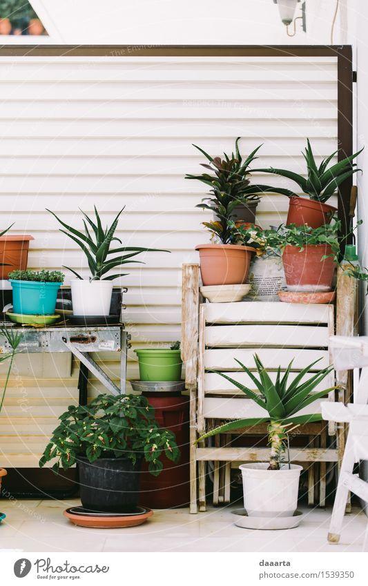 Balkonpflanzen Natur Pflanze grün Sommer Blume Freude Leben Stil Lifestyle Garten Freiheit Stimmung Design Häusliches Leben Freizeit & Hobby elegant