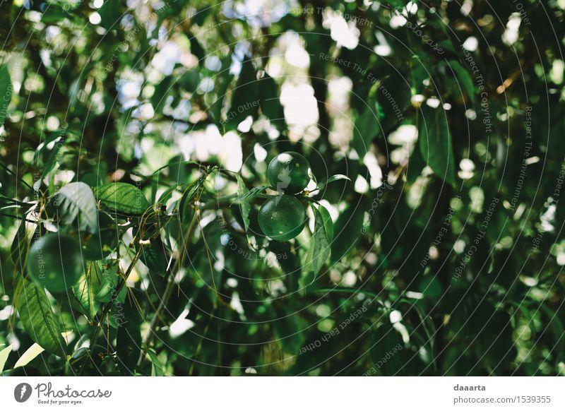 Sommer Limette Natur Ferien & Urlaub & Reisen Pflanze grün Baum Blatt Freude Leben Stil Lifestyle Garten Freiheit Lebensmittel Design Frucht