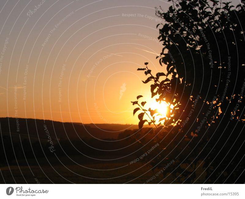 Sonnenuntergang Feld Blatt Berge u. Gebirge