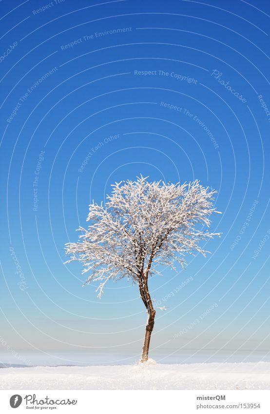 Wintertag. schön weiß Baum blau Winter Einsamkeit Schnee Kraft Kraft gefroren Schönes Wetter einzeln Qualität Winterurlaub